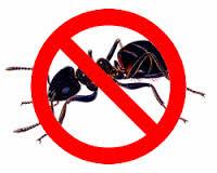sipelgate tõrje kodus ja tööl